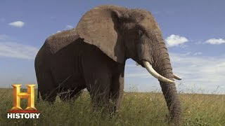 America 101: Why an Elephant for Republicans? | History