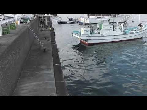 江ノ島湘南港白灯台堤防と北緑地公園釣り場ガイド20181208