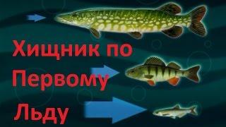 Диалоги о рыбалке - 108 - Окунь по перволедью.