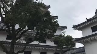 唐津城 ゴールデンレトリバー ミロ thumbnail