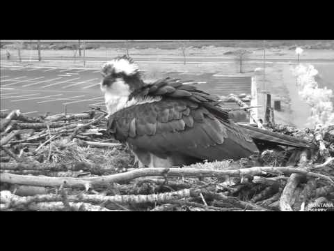 Iris lays egg number 3!   2017 05 02 08 53 17 111