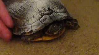 GRUMPY Turtle Talks