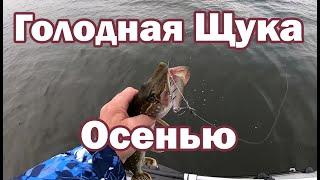 Щука Осенью Рыбалка с лодки Ловля щуки на спиннинг Как ловить щуку осенью Щука на джиг