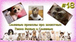 Смешные приколы про животных Такие Милые и Смешные #18  Funny jokes about animals So Cute and Funny