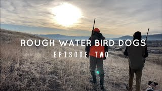 |UPLAND BIRD HUNTING| with German Wirehair Pointers Episode Two!