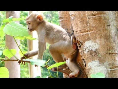 Poor Axel Happy With Amber Troupe | Axel Baby Monkey Jumping  Jumping On The Tree