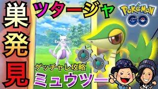【ポケモンGO】ツタージャの巣発見!!ミュウツー&ギアルのゲッチャレ!【第五世代】