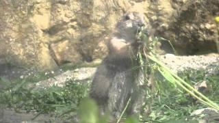Zoo Opole - pieski preriowe