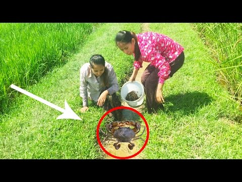 Amazing Crab At Rice Field - Two Beautiful Girls Catch Crab At Countryside
