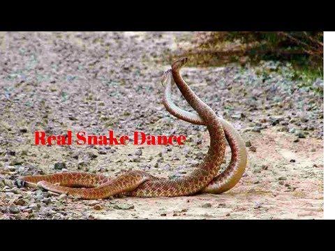 Funny Snake dance l Real Snake Dance in Bangladesh l