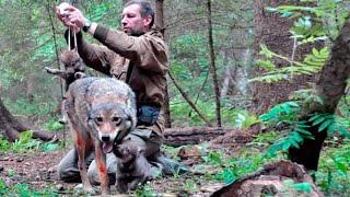 видео: Этот мужчина спас жизнь волчице и ее щенкам, спустя несколько лет стая сама отыскала его...