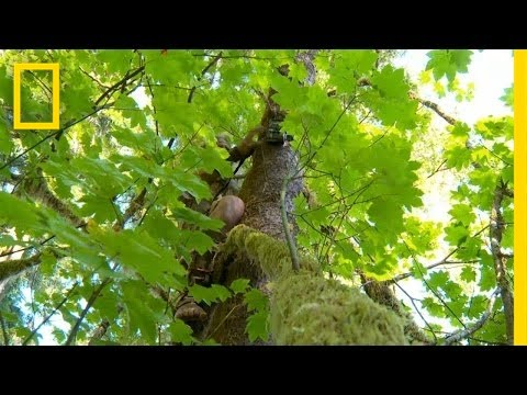 Eyes on  the Forest   The Legend of Mick Dodge