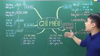 Tác phẩm Chí Phèo - Nam Cao (Sơ đồ tư duy- Thầy Đoàn Mạnh Linh)