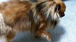 Клиническая картина при грыже диска у собаки