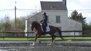 Luca 4 y old stallion by Governor