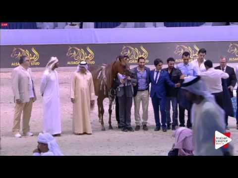 2ND-N.84 ELLE FLAMENCA - Dubai 2016 - Fillies Championship (Class 20)
