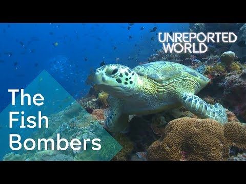 Bombing Endangered Coral Reefs To Catch Fish | Unreported World