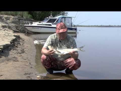 Bonus (Амурские рыбы)