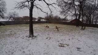 Dogs In Snow | Redeeming Dogs - Dog Training | Dallas/fort Worth Dog Training