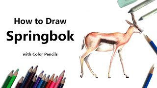 How to Draw a Springbok with Color Pencils [Time Lapse]