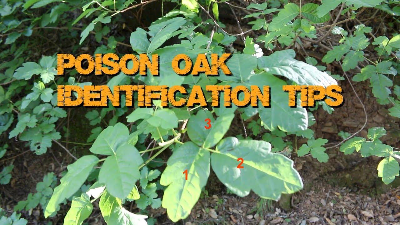 How to Identify Poison Oak