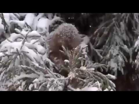 Wild Japan - Best Predators (WildLife Documentary)