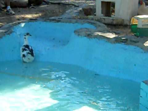 Terminamos el estanque de los patos el hogar de luci for Estanque para patos y peces