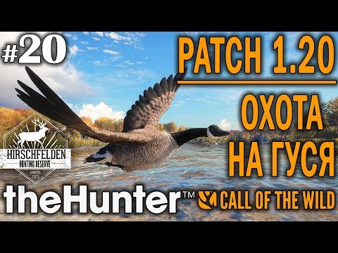 TheHunter Call Of The Wild #20 🔫 - Патч 1.20 Охота на Гуся - Ружье + Дробь - Канадская Казарка