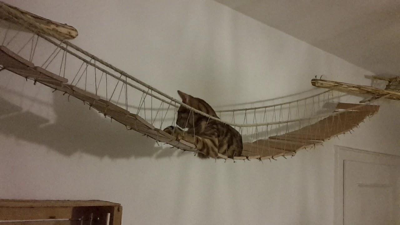 Bekannt Katze auf selbstgebauter Hängebrücke - YouTube UT59