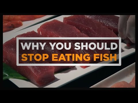 Why You Should Stop Eating Fish