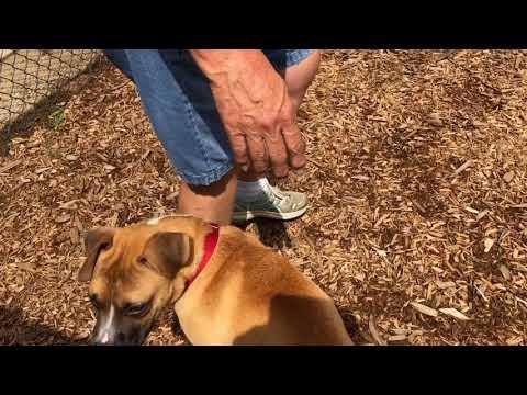 Adoptable dog Midge, beautiful and smart