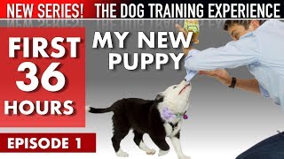 my-new-puppy-the-first-36-hours-new-series-the-dog-training-experience-episode-1