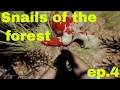 Snails of The Forest Ep.4