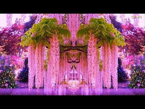 WOW! Magnificent Colors of Wisteria - Beautiful Flowers