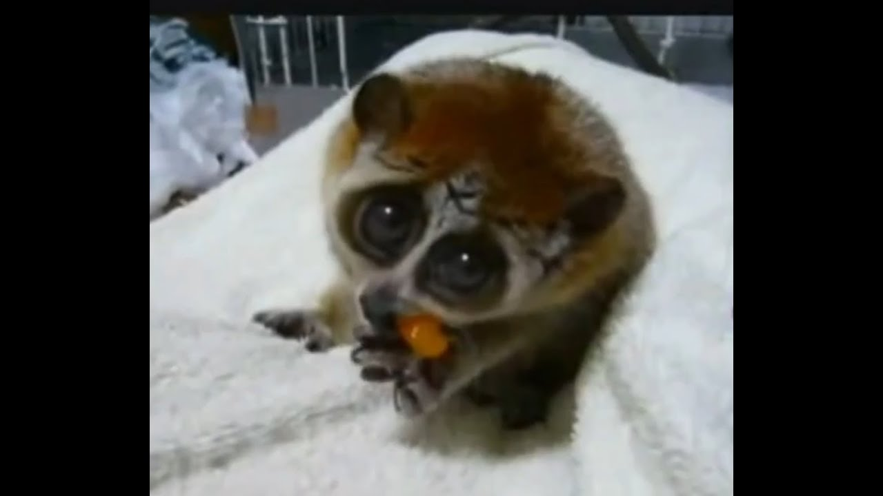 Most funny animals ever | Cutest funny animals 2014 - YouTube