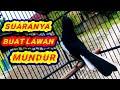 Masteran Kacer Bongkar Isian Full  Mp3 - Mp4 Download