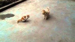 猫と犬の喧嘩 Cat vs Dog.