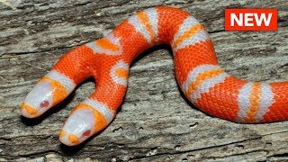 10 Most Shocking Real Mutations In Animals