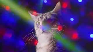 ❤10ЧАСОВ❤  #ДИСКОТЕКА КОШЕК#  Meow Mix song