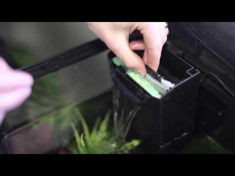 How to do Monthly Aquarium Maintenance and Water Change