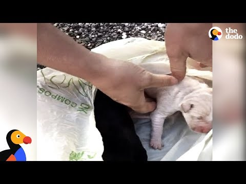 Crying Puppies Tied Up in Bag Rescued by Incredible People | The Dodo