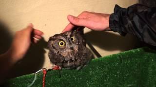 Asakusa's Owl Cafe