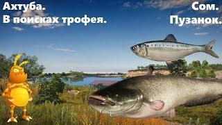 Нашли трофея Пузанок Сом Фарм серебра 1440p Русская рыбалка 4 Russian Fishing 4