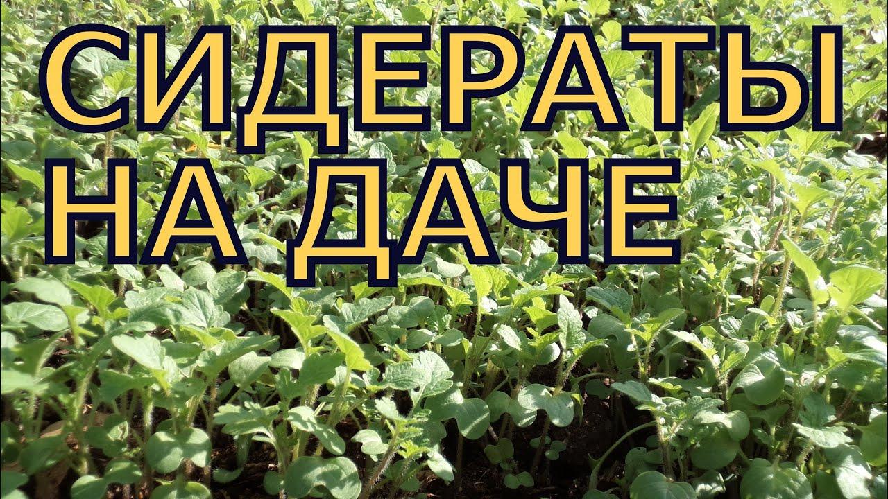 . Вы можете купить аяваску, (аяхуаску), семена коки, купить аяуаску, купить споры псилоцибиновых грибов, набор для выращивания грибов, купить листья коки, купить сальвию дивинорум, а так же. Псилоцибиновые трюфели.