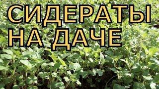 видео Вредители люцерны на семена
