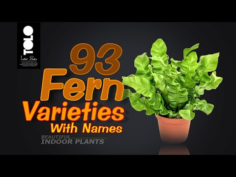 93 Fern Varieties with names | Indoor Fern Collection