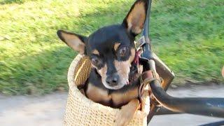 ADORABLE LITTLE DOG!!! (10-28-14) [305]