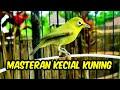 Master Kecial Kuning Joss Rapet Dijamin Nyaut  Mp3 - Mp4 Download