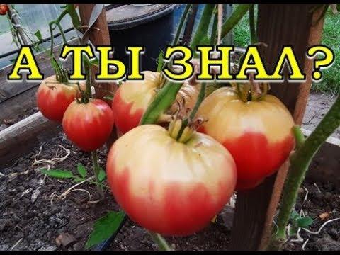 Вопрос: Почему у томатов белая и жёсткая серединка?