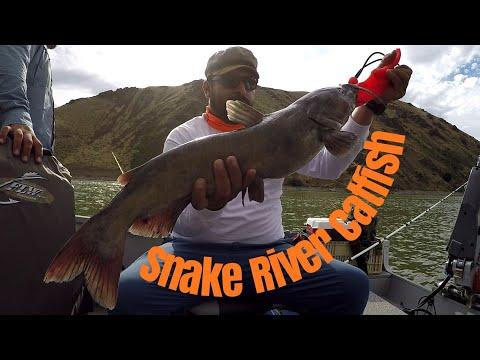 Catfishing On The Snake River